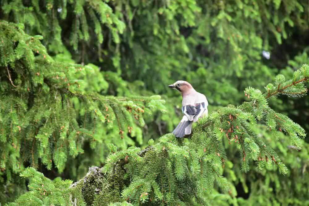 Priroda Nacionalni park Durmitor