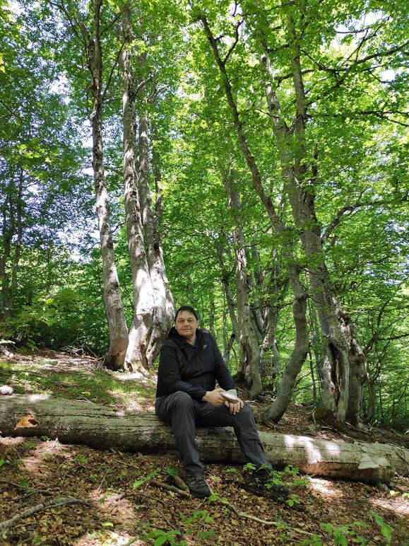 Šuma oko Komova