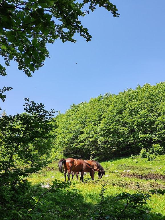 Konji na Komovima